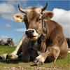 FotoVýzva - 4. kolo Říše zvířat: vyhodnocení