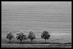 Lonely trees