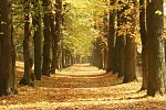 Podzim - Komentáře: 17