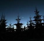 Záře za stromy