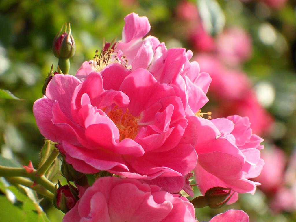 Samsung WB650: Kvetina