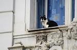 Kočičák na vyhlídce