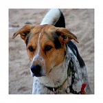 Dog's  from Cabo Verde