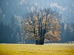 Skupina stromů