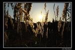Tráva v západu slunce