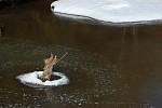Zimní rybníček