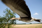 Ptačí úlet