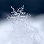 Otisk zimy