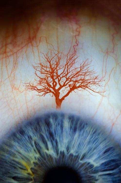 Strom vědění