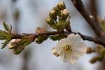 probouzení jara