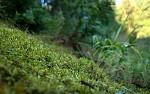 zelená pro uklidnění