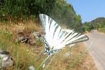 letící motýl