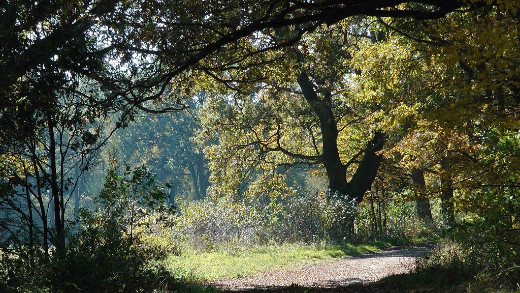 Podzim za naší chalupou