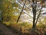 Barvy podzimu 2