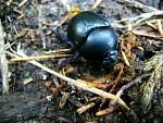 Makro hmyzu