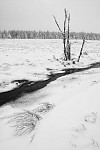 Zasněžený potok