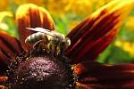 Včela na květu