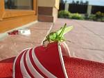 Kobylka na návštěvě