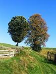 Stromy v poli