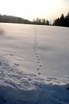 Idylka sněhová
