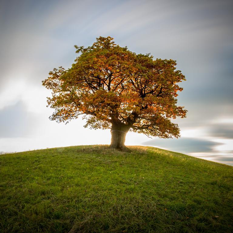 Strážní strom