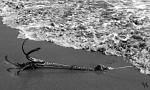 Ukotvené more