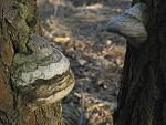 Lesný rozhovor