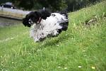 Letající pes
