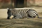Z Liberecké zoo