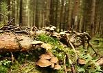 Houbičky v lese