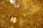 Podzim pod hladinou