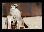 Rychlý cvak ptáčka
