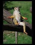 Opička - vyhřívání na sluníčku (nebo medituje?)