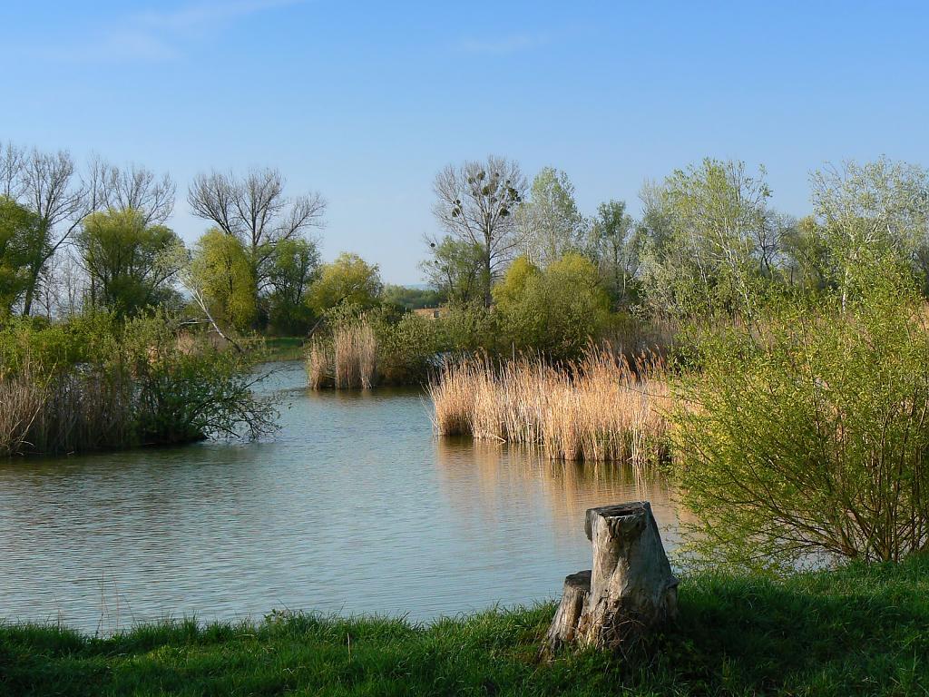 Jarní rybník brčálník