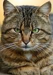 Kočka Honza