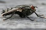 Hnusná moucha