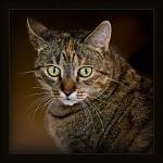 ...portrét kočky Žofie...