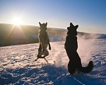 Tanec s vlky I
