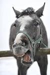 Když se kůň směje... aneb dej sem tu poslední kostku