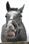I kůň umí ohrnovat nos