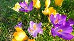 Vítání jara