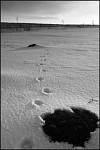 Cestou sněhovou
