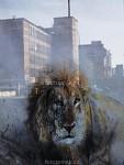 Zlín sun leones