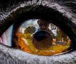 Autoportrét v dračím oku