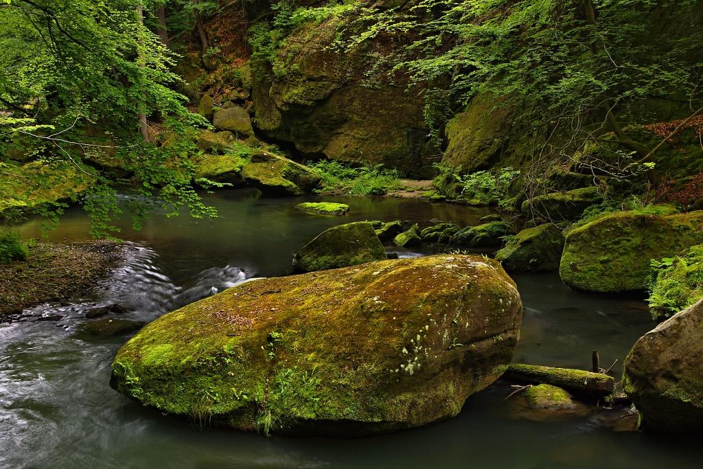 V rieke
