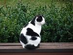 Mačička monochrómka
