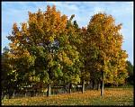 Jeseň v Bratislave 2