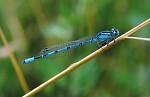 Modrá vážka -   Zobrazení: 15679