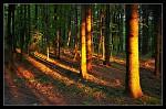 Ozářený les