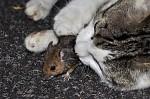 Jako kočka s myší...